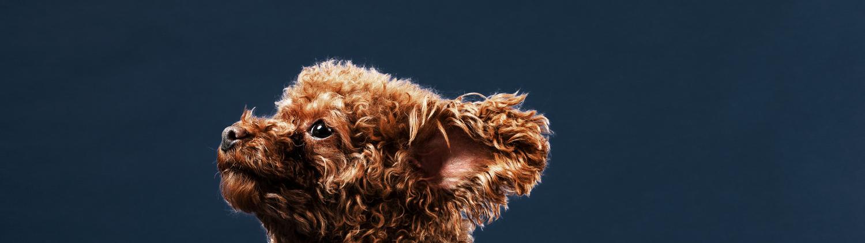 pet-supplies-digital-marketing-insights